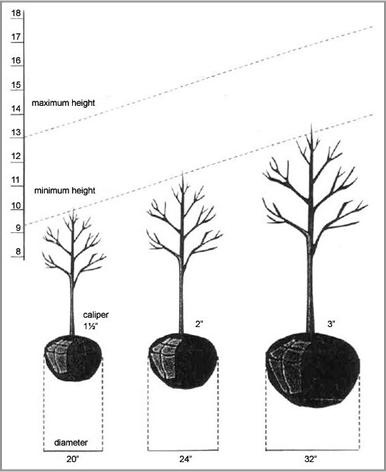 illustration of how to 'size' a tree